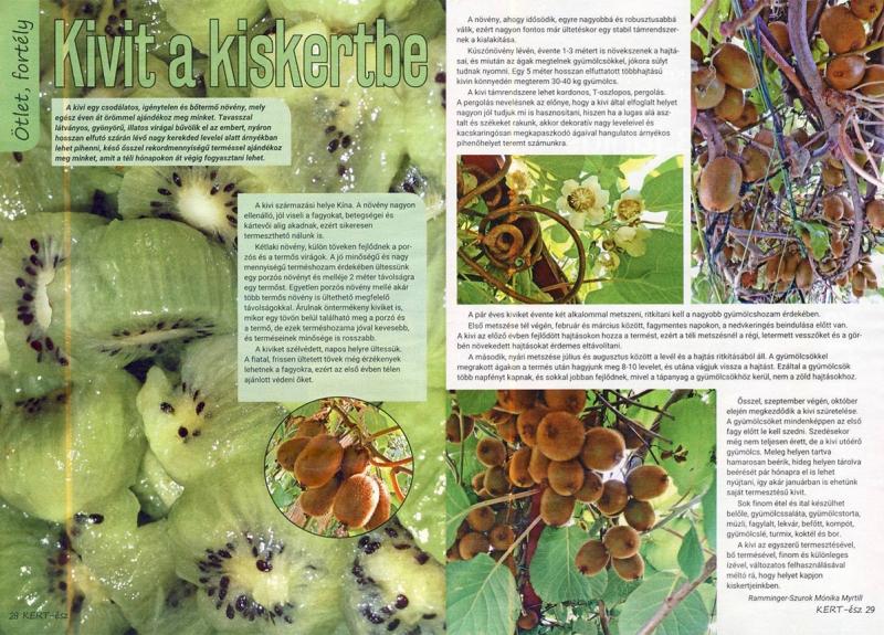 Presse: Meine Kiwi Fotos und fachliche Beschreibung in einem ungarischen Garten-Magazin