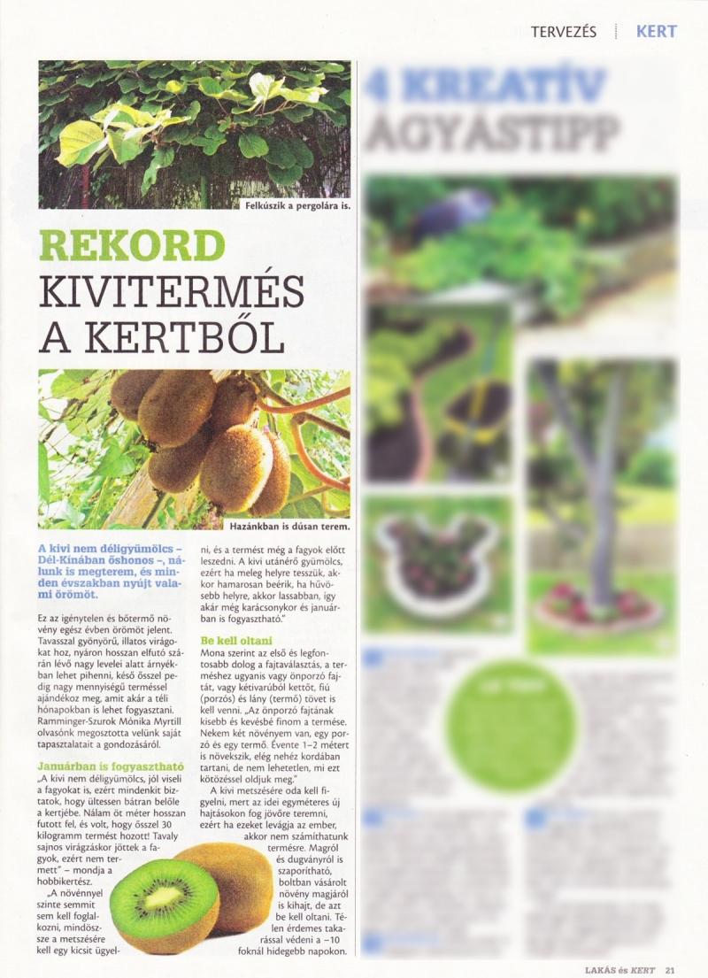 Presse: Meine Kiwi Fotos und eine kurze Beschreibung in einem ungarischen Garten-Magazin